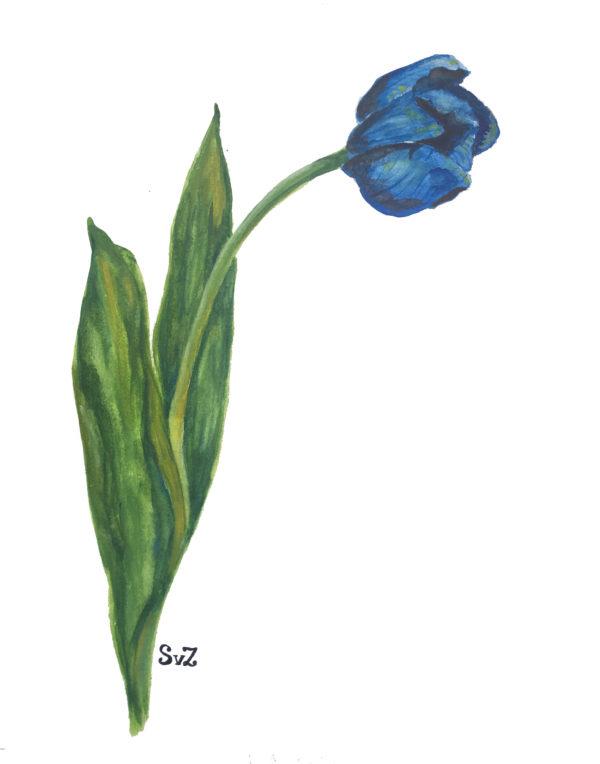 Artwork, tulp, aquarel, natuur, Waterkunst